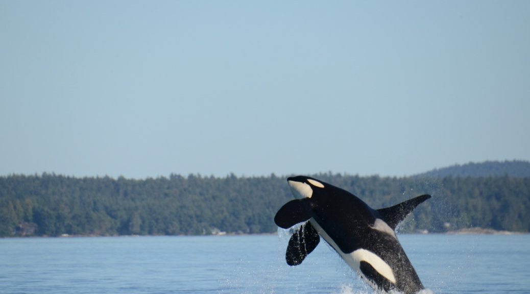Image Credit: Center for Whale Research