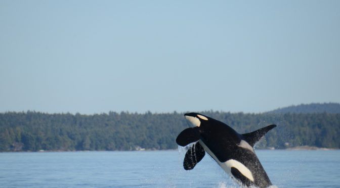 Another Month, Another Orca, And Still No Action