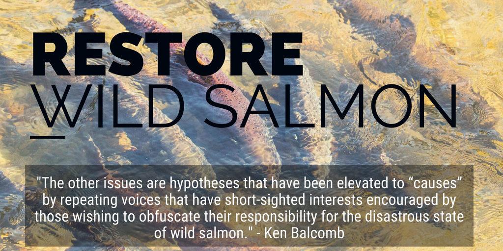 restore wild salmon_2 balcomb